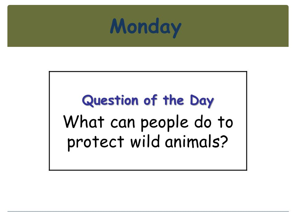 What can people do to protect wild animals