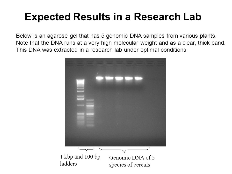Expected Results in a Research Lab