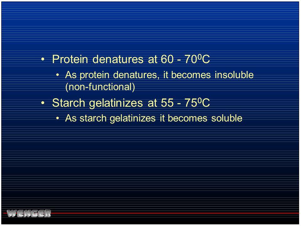 Protein denatures at 60 - 700C