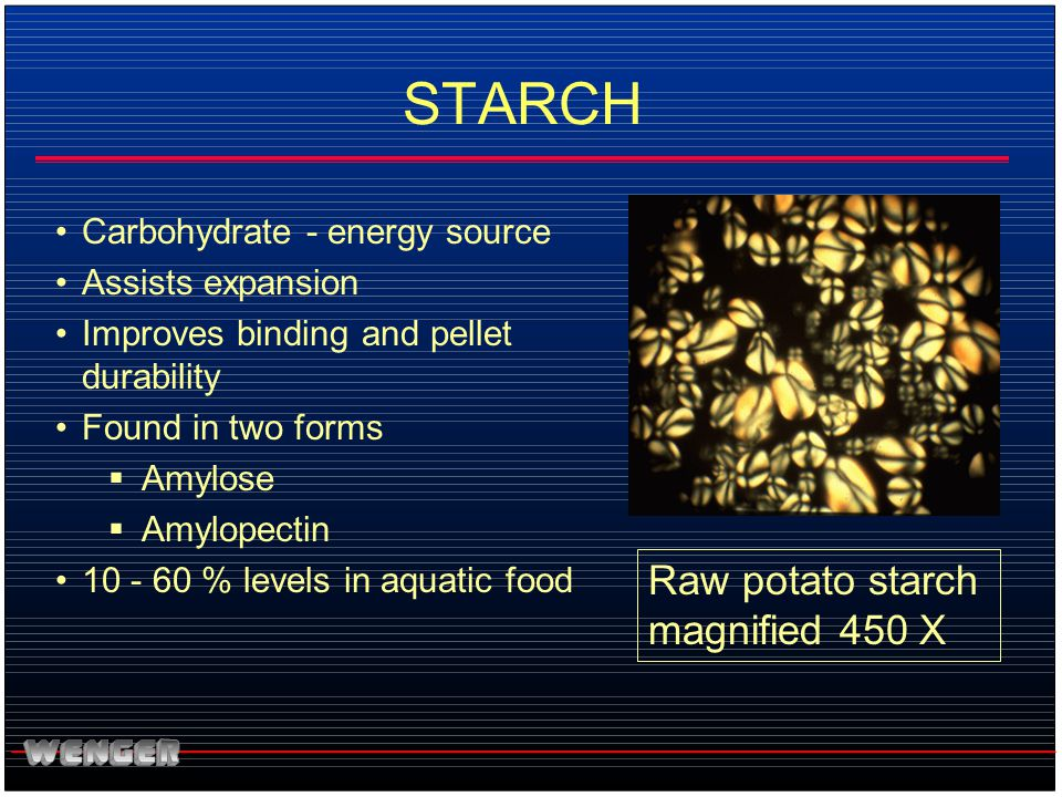 STARCH Raw potato starch magnified 450 X Carbohydrate - energy source