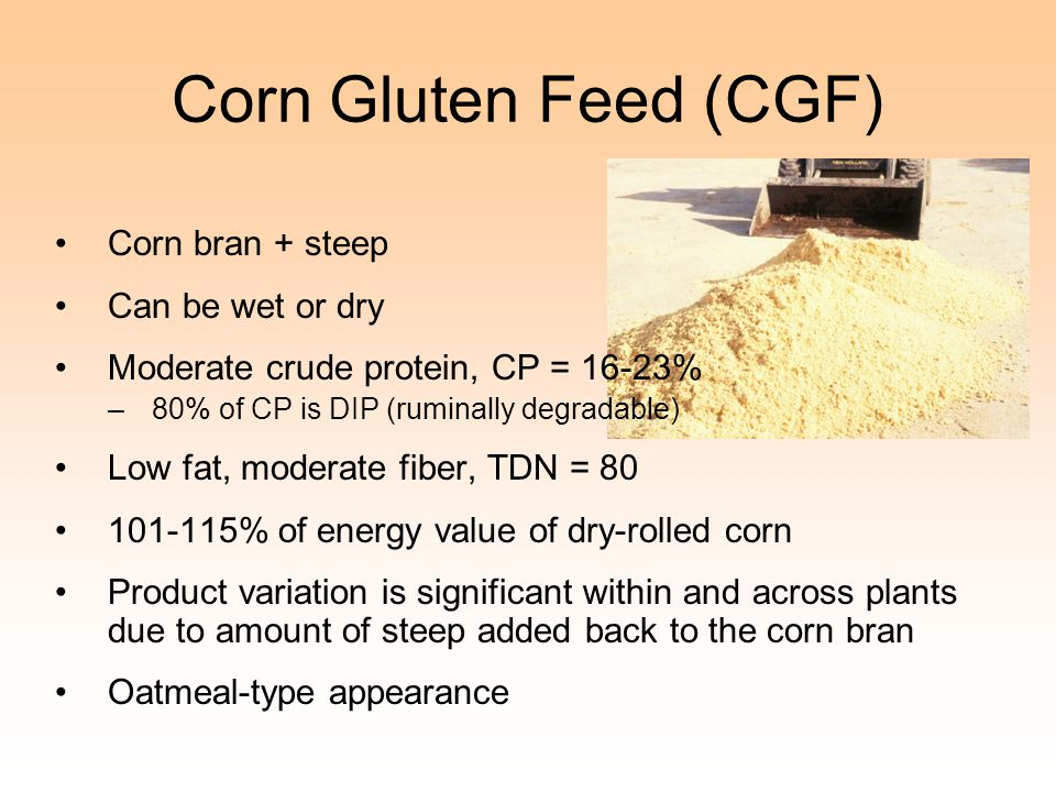 Corn Gluten Feed (CGF) Corn bran + steep Can be wet or dry