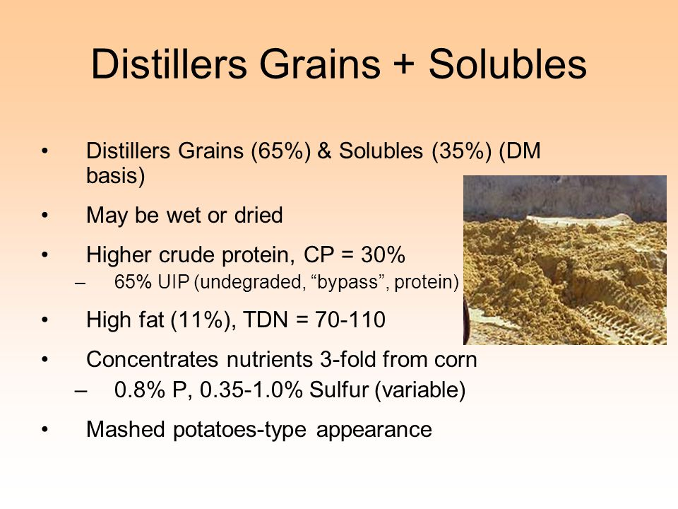 Distillers Grains + Solubles
