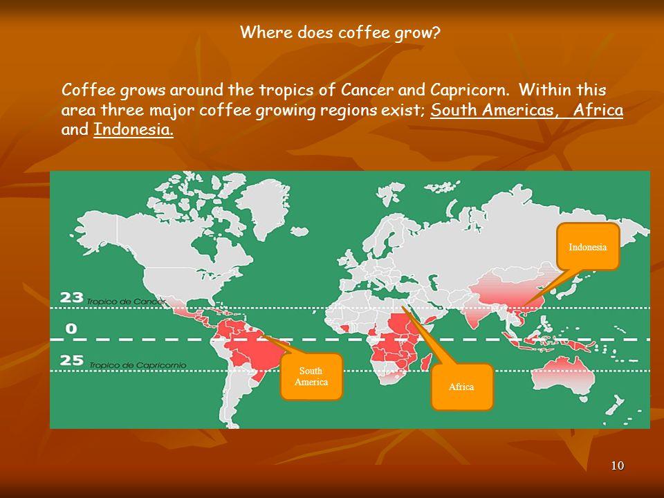 Where does coffee grow