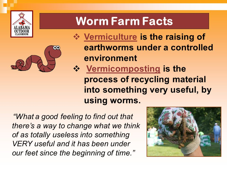 4/13/2017 Worm Farm Facts. Vermiculture is the raising of earthworms under a controlled environment.
