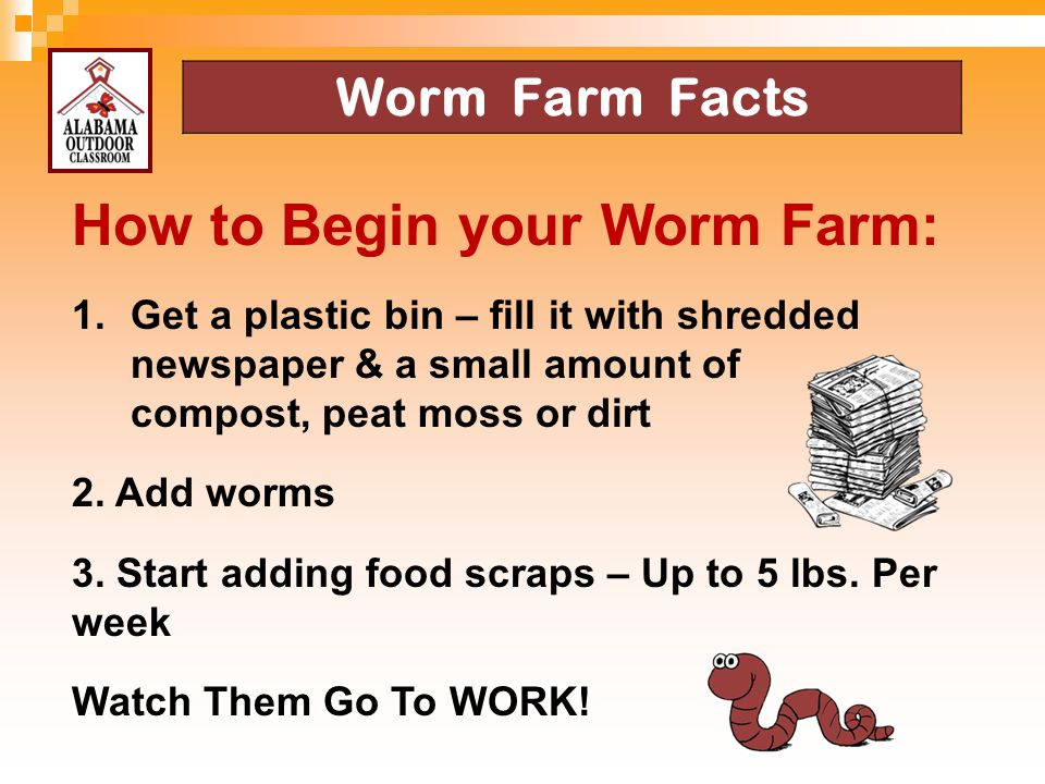 How to Begin your Worm Farm: