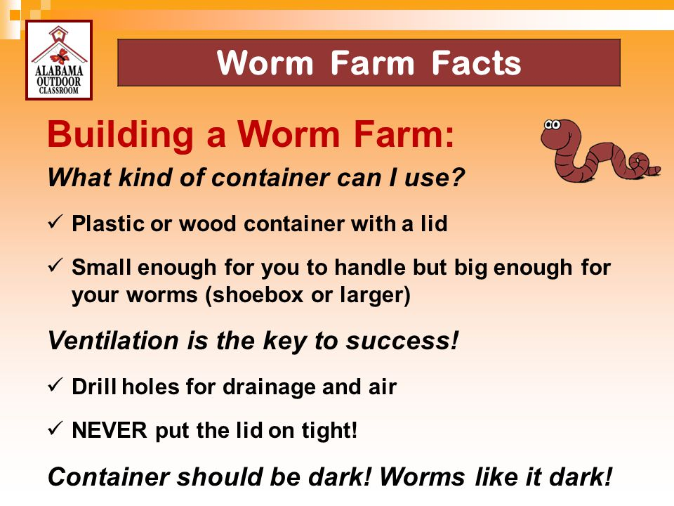 Building a Worm Farm: Worm Farm Facts