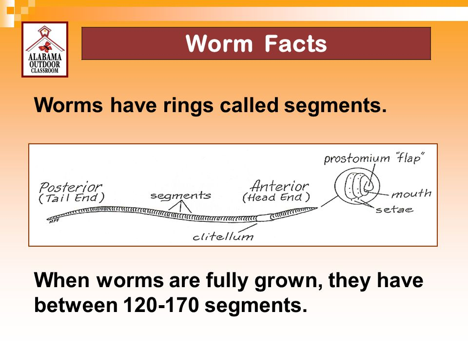 Worm Facts Worms have rings called segments.