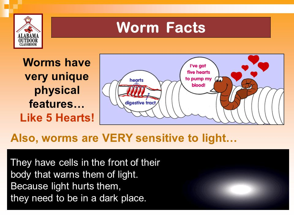 Worms have very unique physical features…