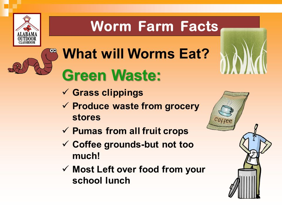 Green Waste: Worm Farm Facts What will Worms Eat Grass clippings