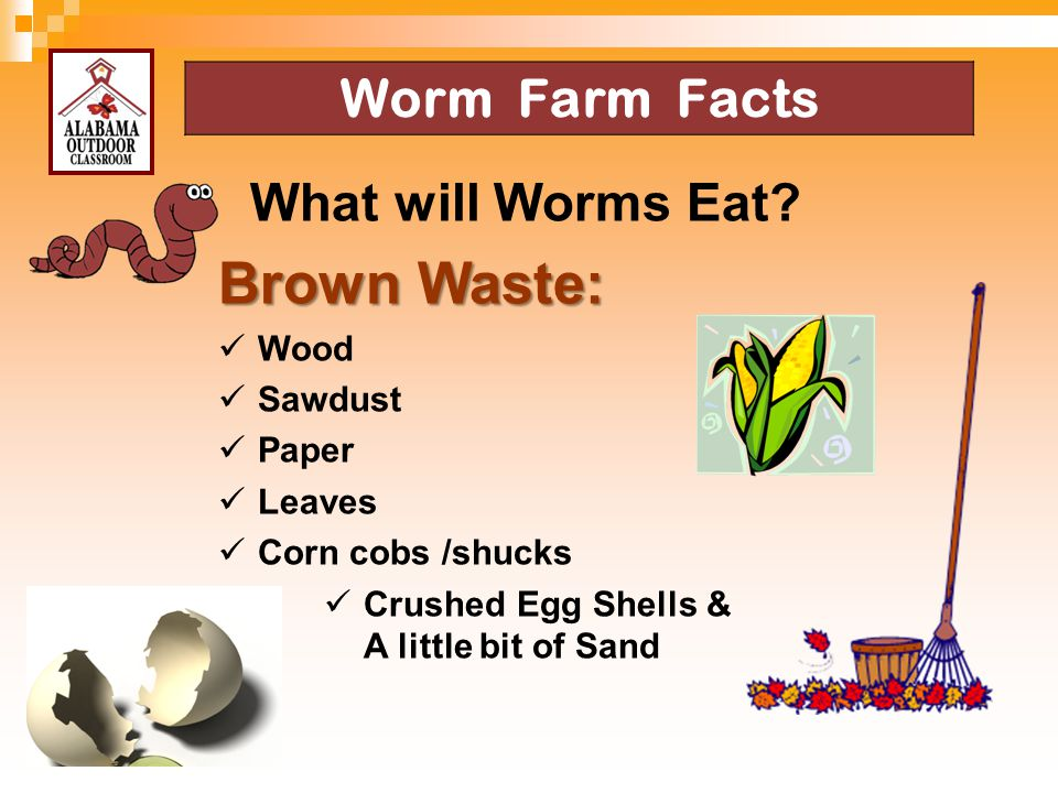 Brown Waste: Worm Farm Facts What will Worms Eat Wood Sawdust Paper