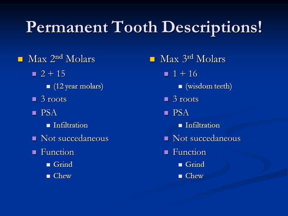 Permanent Tooth Descriptions!