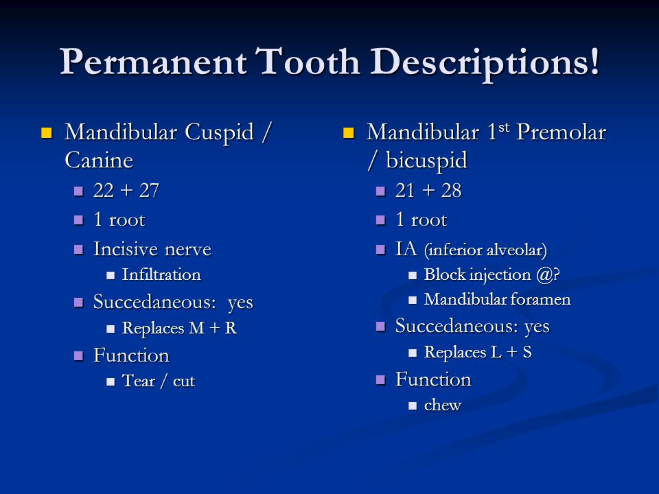 Permanent Tooth Descriptions!