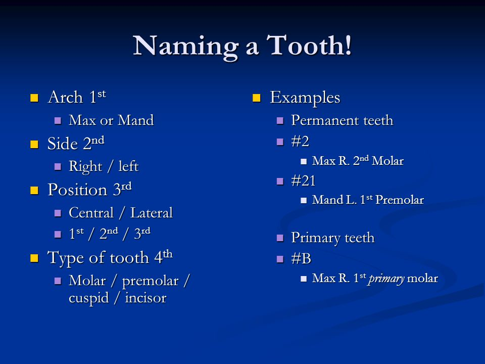 Naming a Tooth! Arch 1st Side 2nd Position 3rd Type of tooth 4th