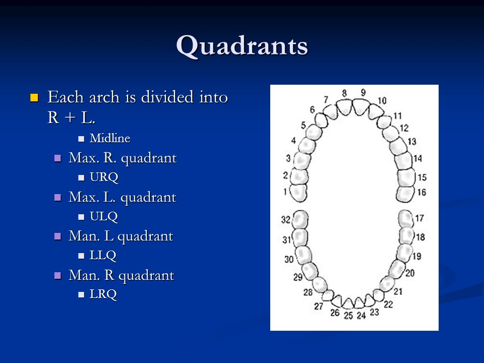 Quadrants Each arch is divided into R + L. Max. R. quadrant