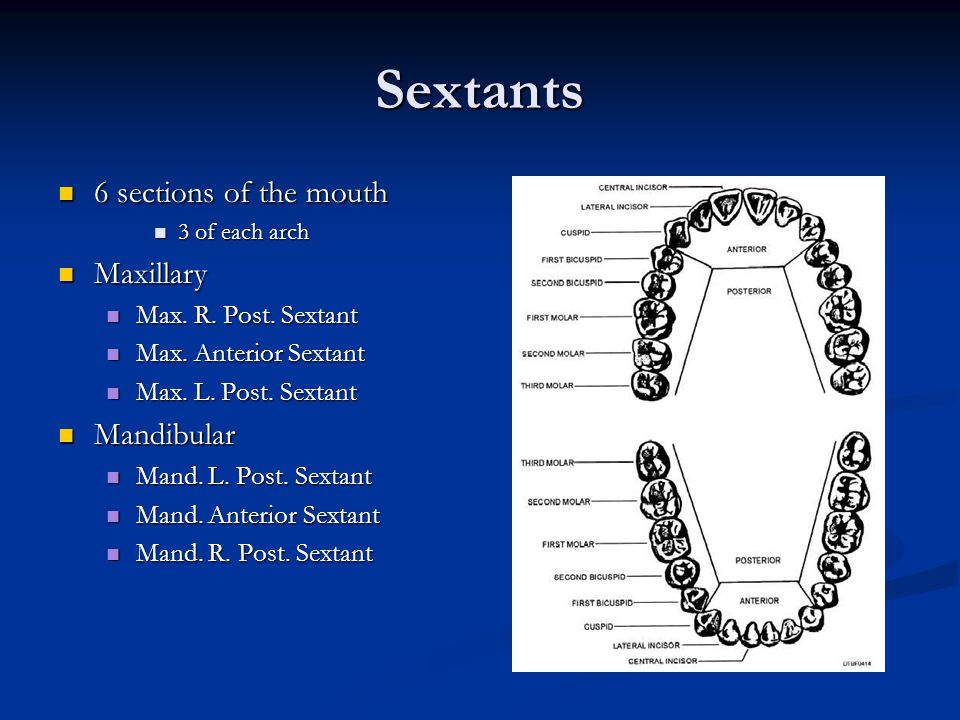 Sextants 6 sections of the mouth Maxillary Mandibular