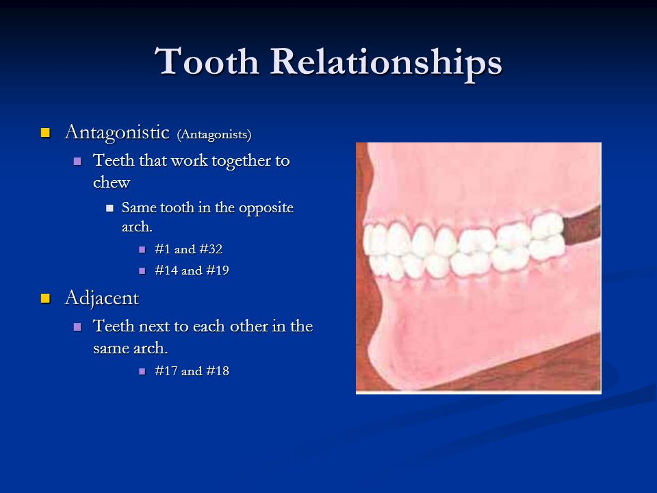 Tooth Relationships Antagonistic (Antagonists) Adjacent