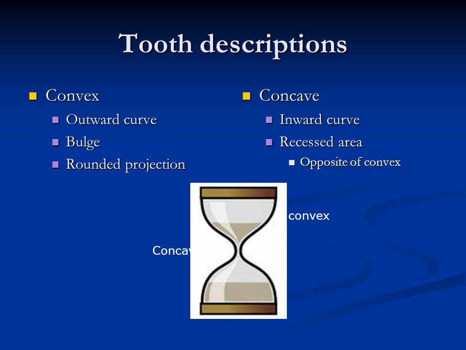 Tooth descriptions Convex Concave Outward curve Bulge