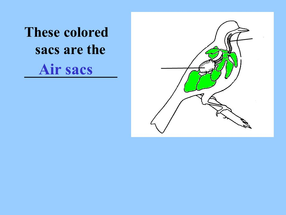 These colored sacs are the
