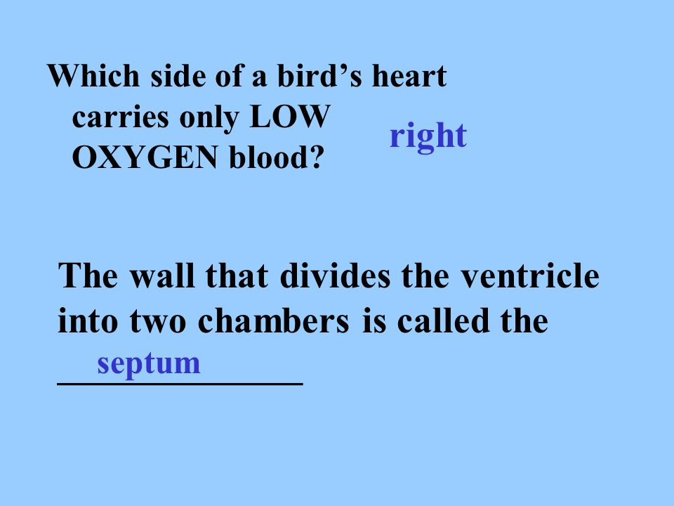 Which side of a bird's heart carries only LOW OXYGEN blood