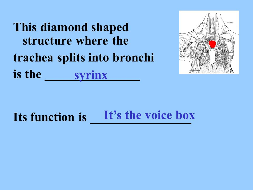 This diamond shaped structure where the