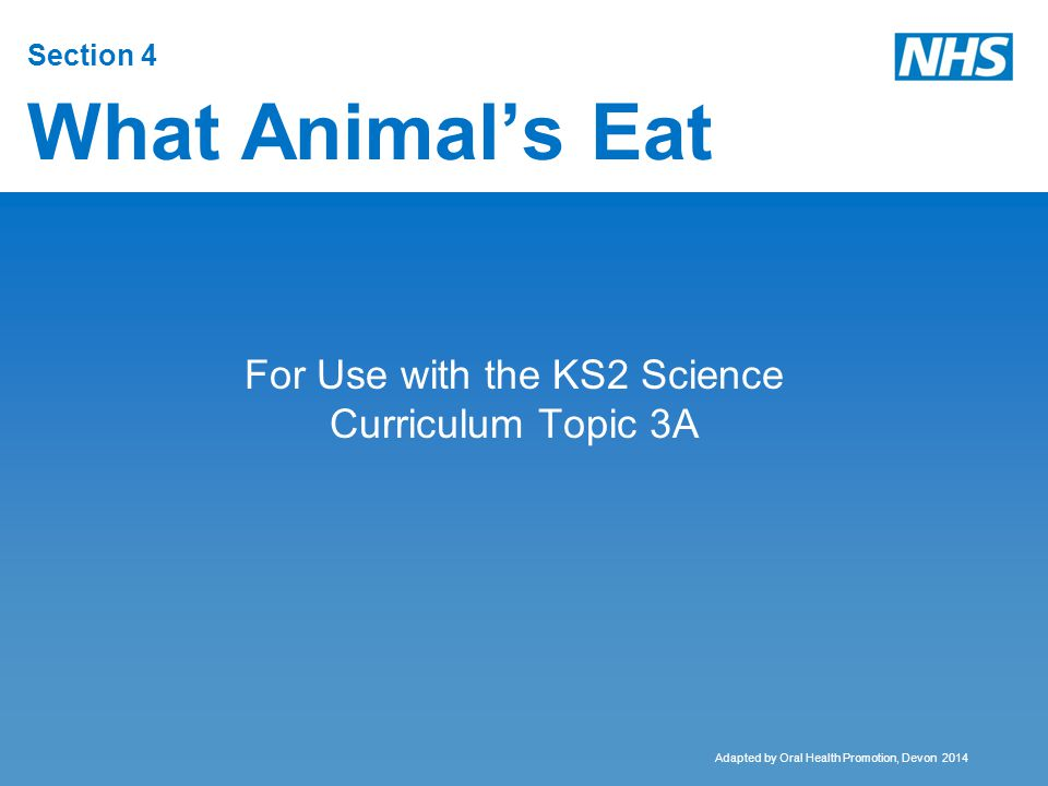 Section 4 What Animal's Eat