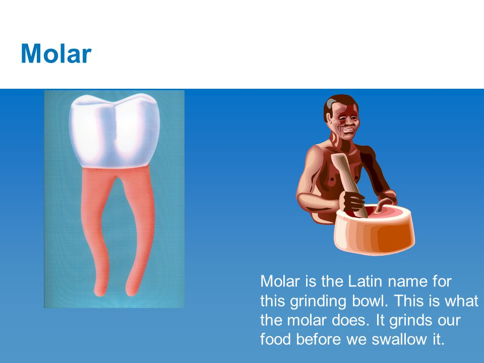 Molar Molar is the Latin name for this grinding bowl.