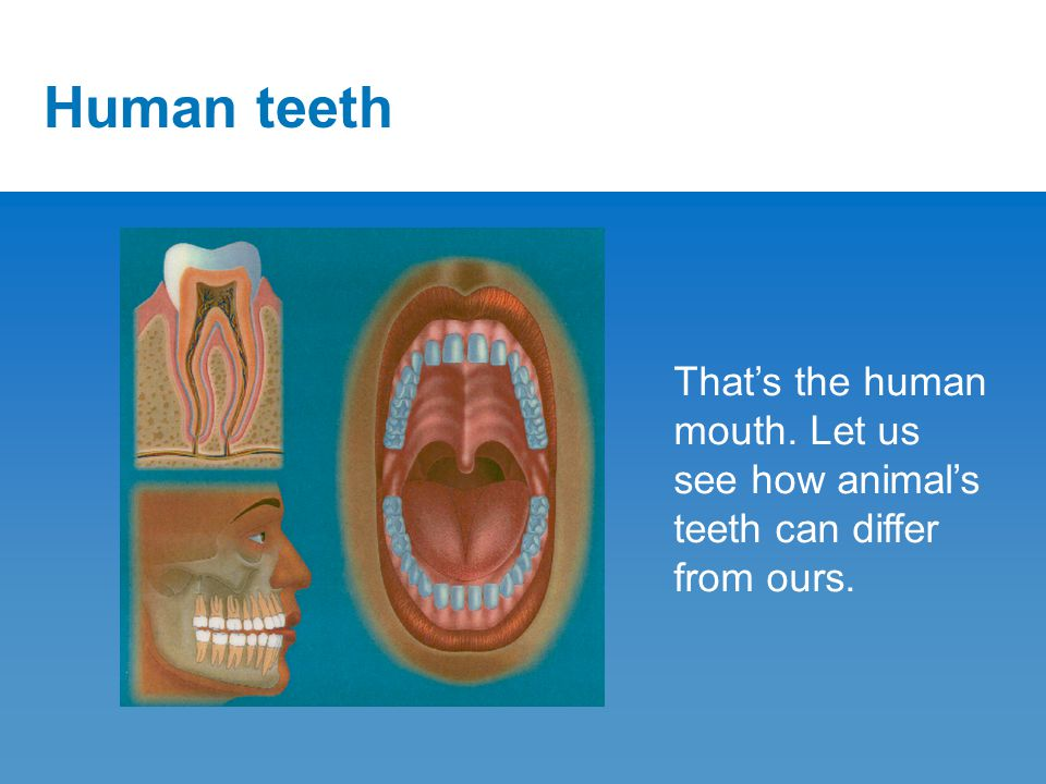 Human teeth That's the human mouth. Let us see how animal's teeth can differ from ours.