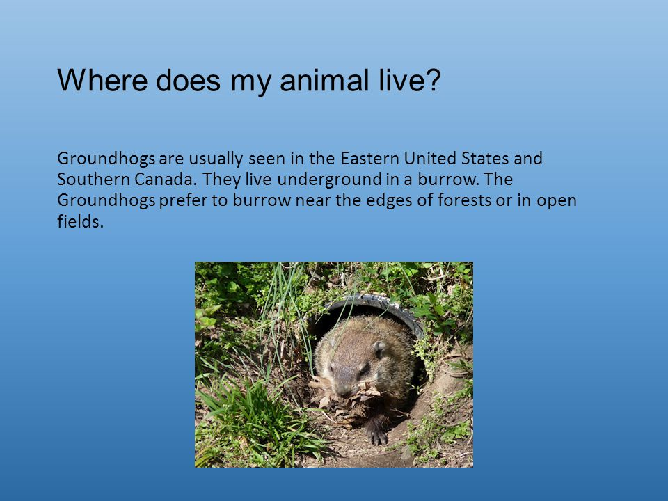 Where does my animal live