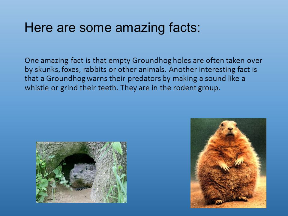 Here are some amazing facts: