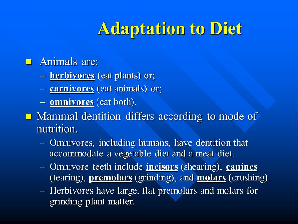 Adaptation to Diet Animals are: