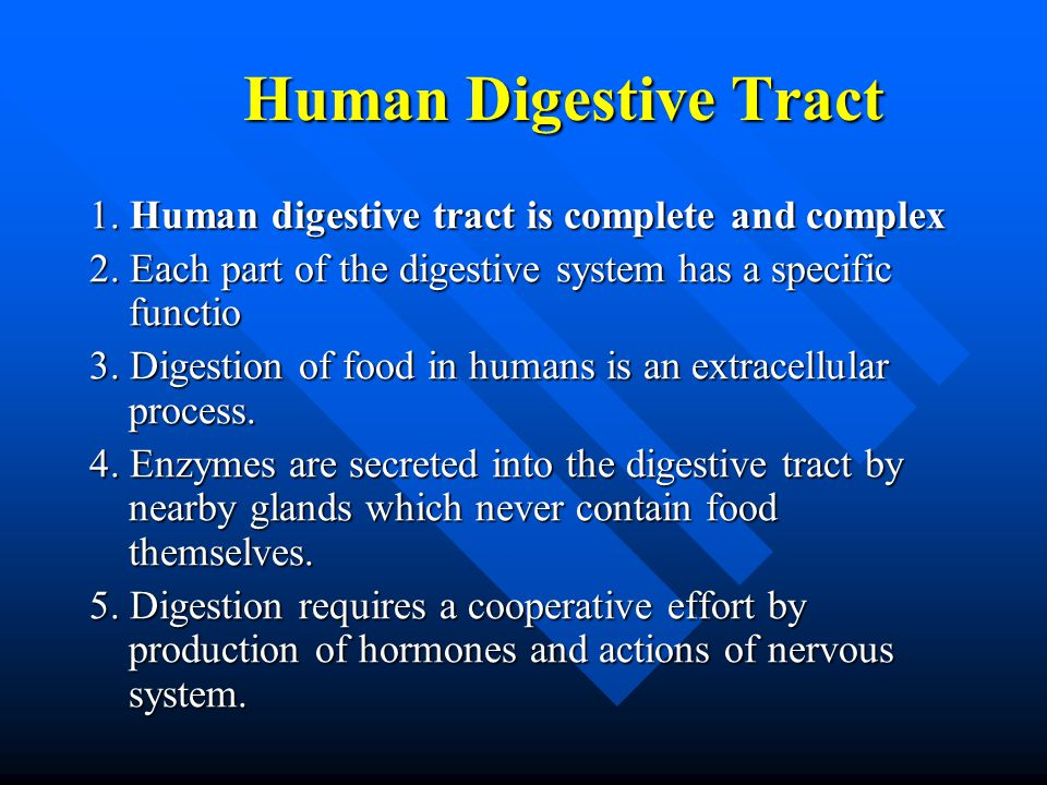 Human Digestive Tract 1. Human digestive tract is complete and complex