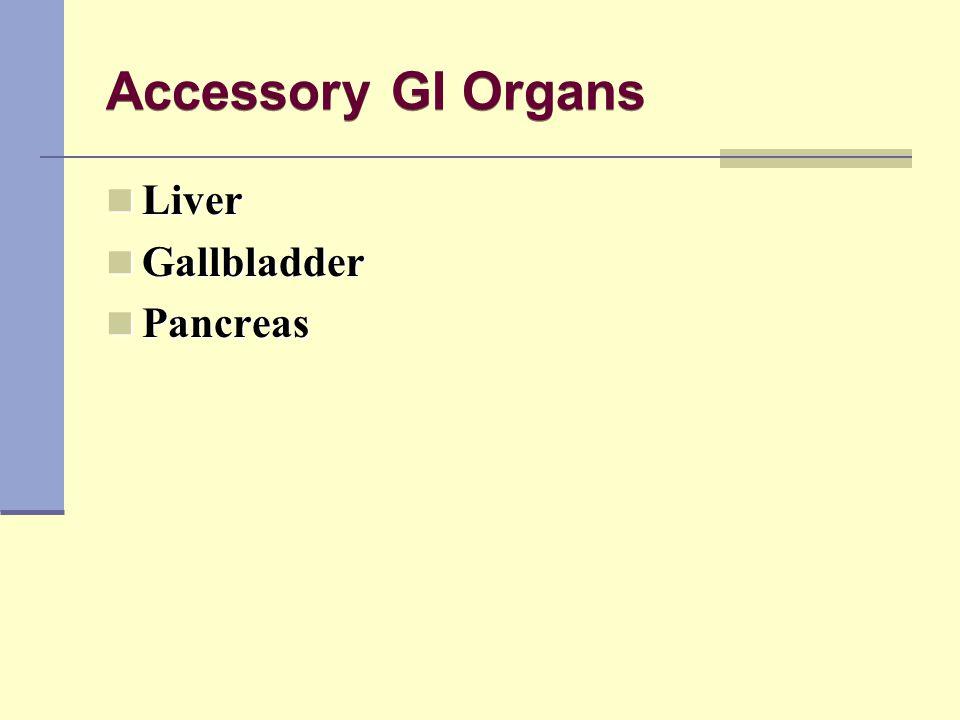 Accessory GI Organs Liver Gallbladder Pancreas