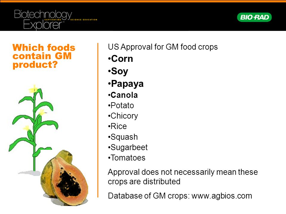 Which foods contain GM product