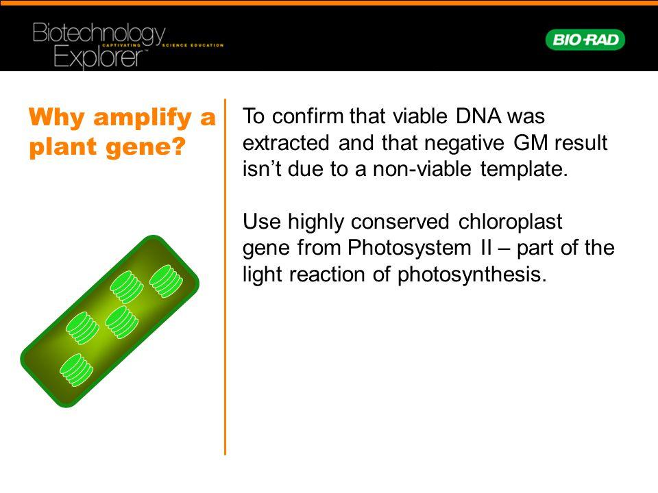 Why amplify a plant gene