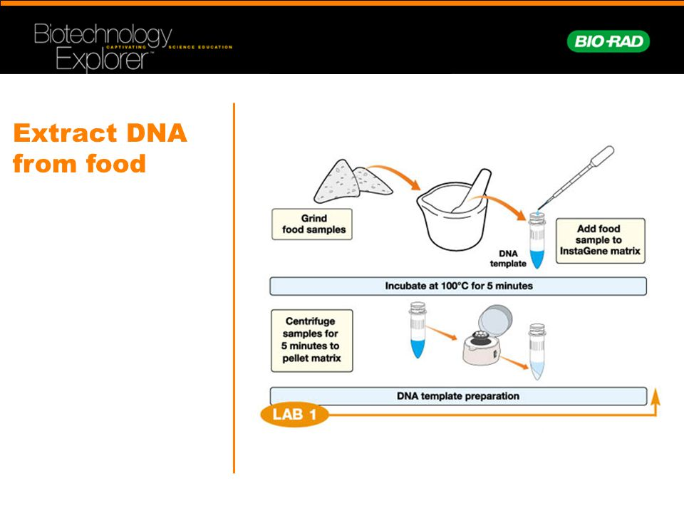 Extract DNA from food Take out the quick guides: How many of you teach English Language learners. Point out the images…
