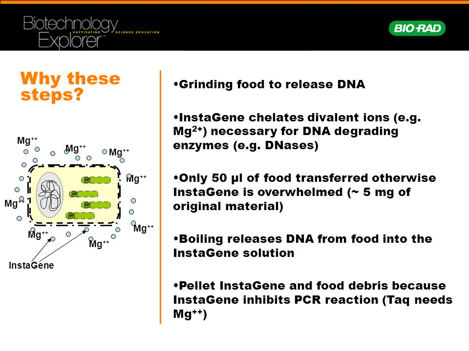 Why these steps Grinding food to release DNA