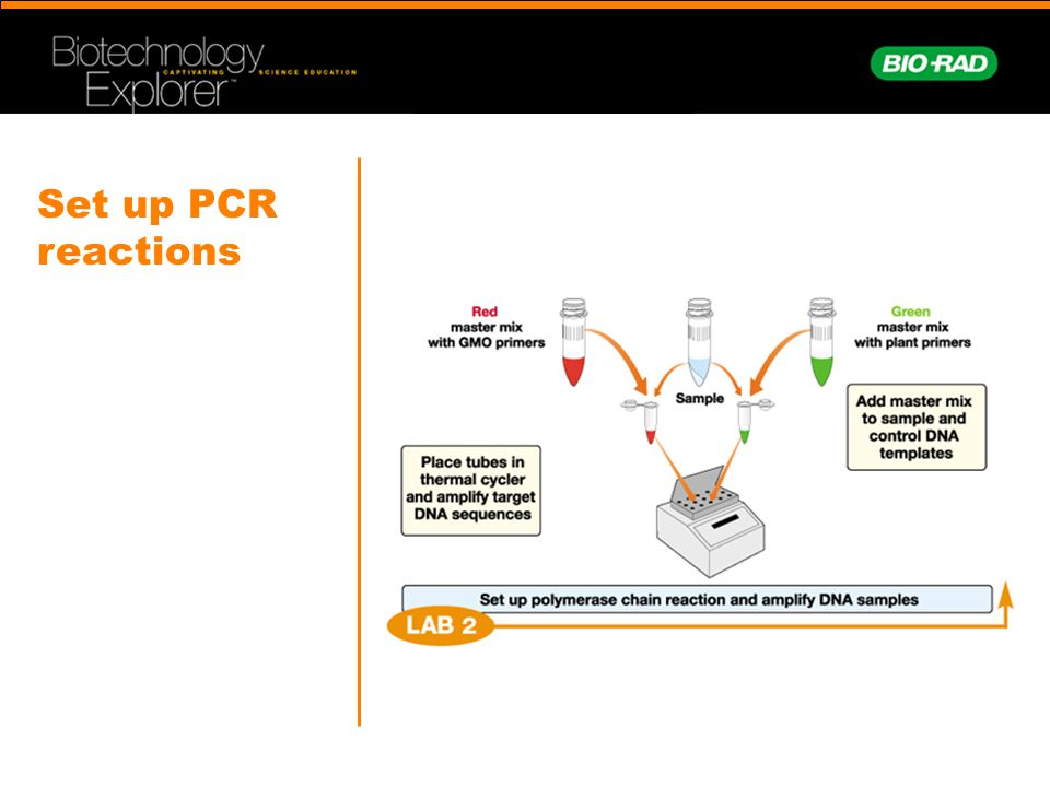 Set up PCR reactions What are the things we need to do a PCR.
