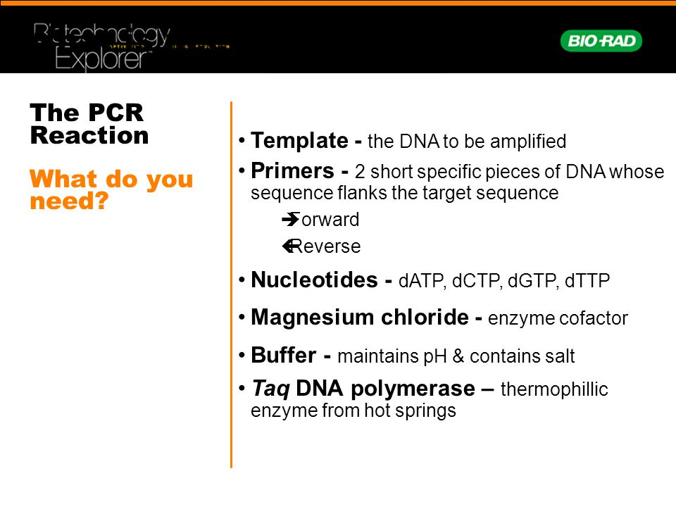 The PCR Reaction What do you need
