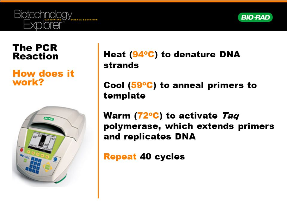 The PCR Reaction How does it work
