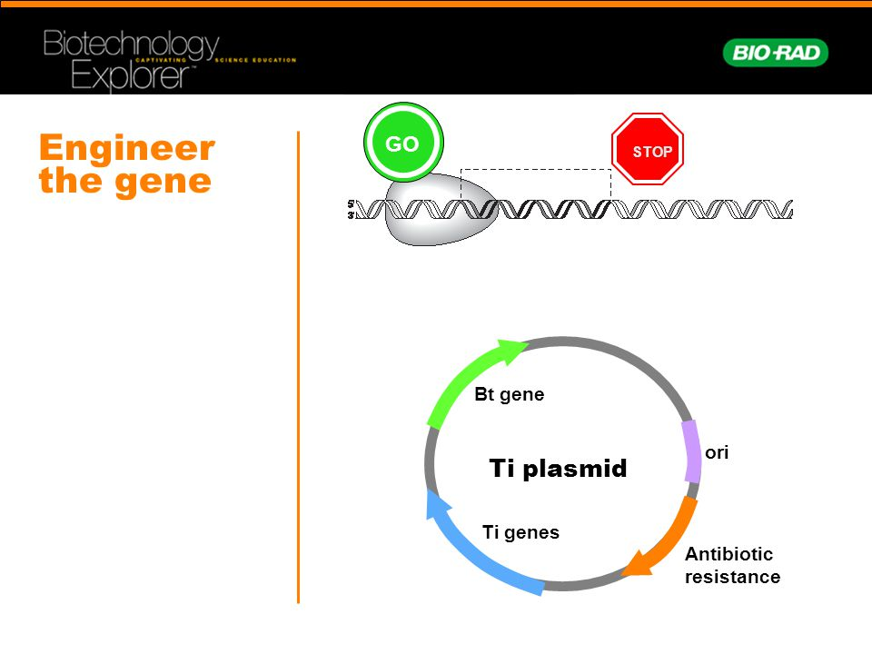 Engineer the gene Ti plasmid GO Bt gene ori Ti genes