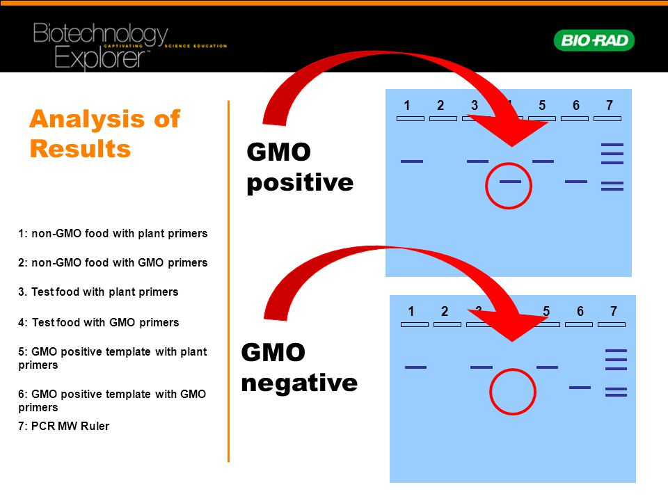 Analysis of Results GMO positive GMO negative 1 2 3 4 5 6 7 1 2 3 4 5