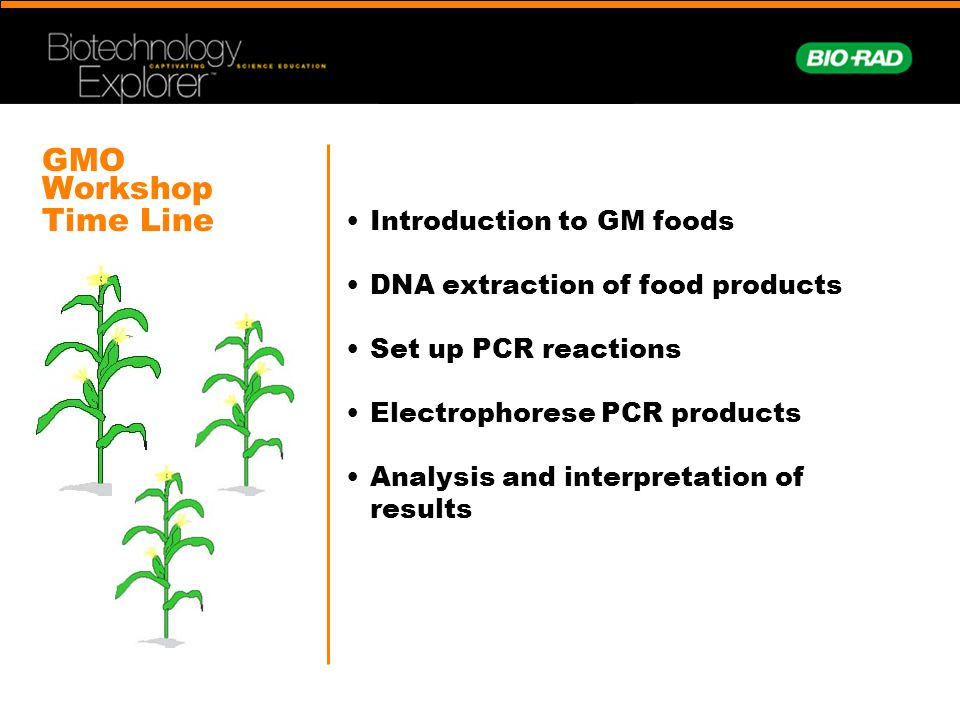 GMO Workshop Time Line Introduction to GM foods