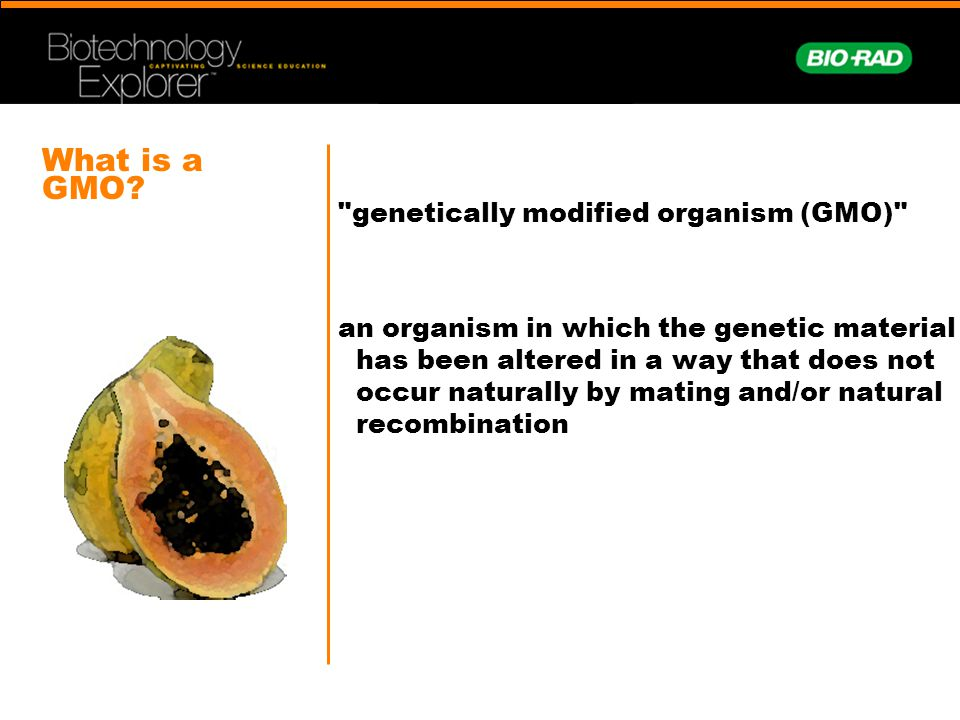 What is a GMO genetically modified organism (GMO)