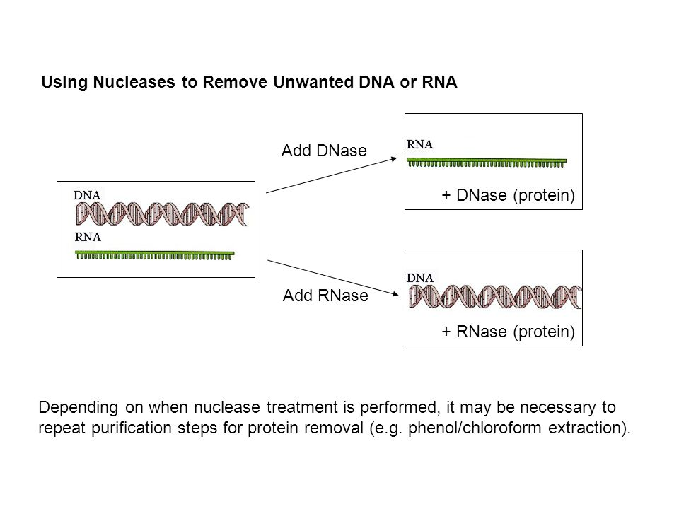 Using Nucleases to Remove Unwanted DNA or RNA