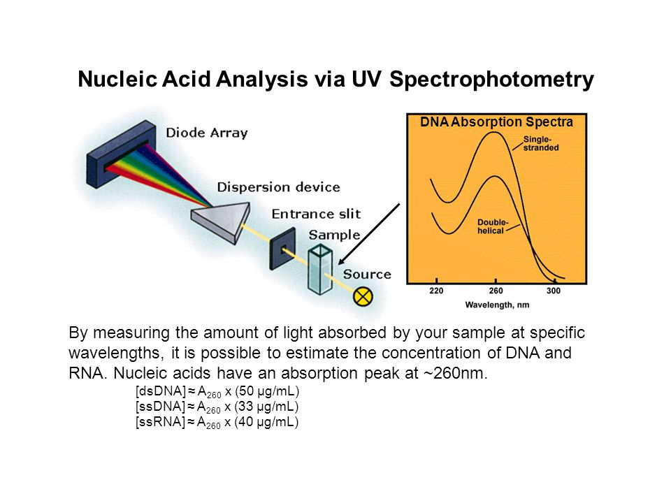 Nucleic Acid Analysis via UV Spectrophotometry