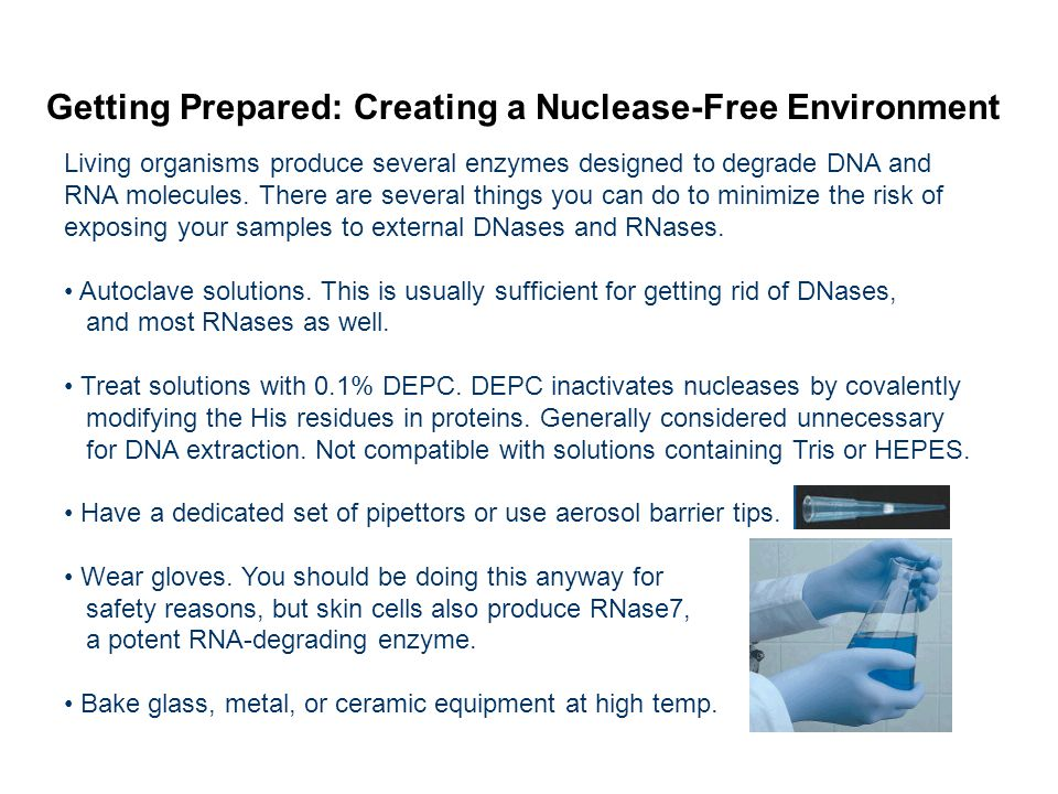 Getting Prepared: Creating a Nuclease-Free Environment