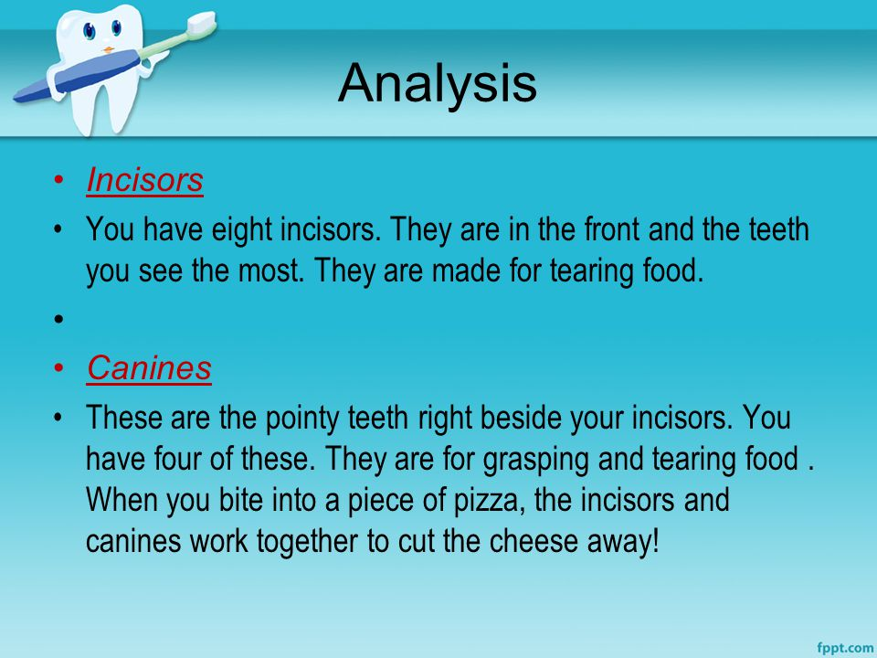 Analysis Incisors. You have eight incisors. They are in the front and the teeth you see the most. They are made for tearing food.