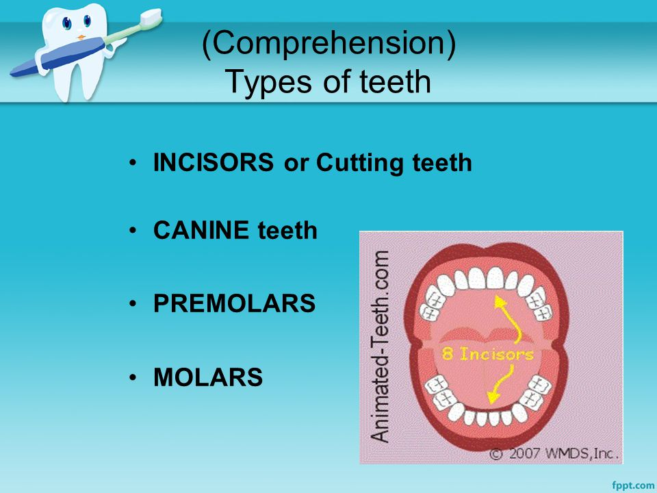 (Comprehension) Types of teeth