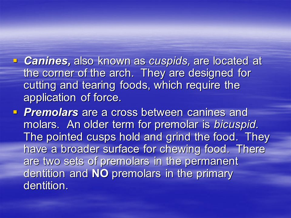 Canines, also known as cuspids, are located at the corner of the arch