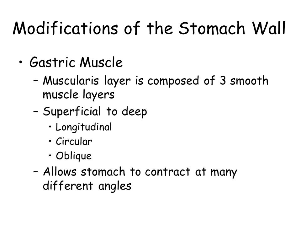 Modifications of the Stomach Wall